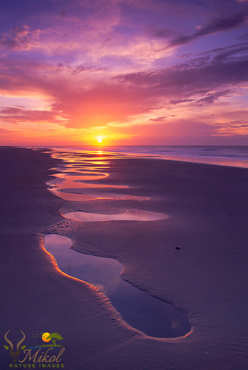 Yellow morning sun rising above the ocean, puddles of water collected on the beach, purple hues to the beach and sky.