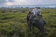 Asian elephant (Elephas maximus) & tourists<br /> Kaziranga National Park<br /> Assam<br /> North East India<br /> UNESCO World Heritage Site<br /> ENDANGERED