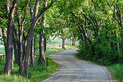 Back country road winding through trees, near Ennis (south of Dallas), Texas, USA