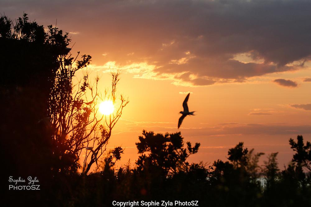 Great Gull Island Sunset