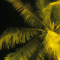 Asia, Vietnam, Hoi An, Blurred image of palm tree in wind along Thu Bon River at night