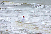 A lady wearing a Santa hat enters the sea. Participants dressed up for Folkestone Lions Club Boxing Day Dip.  An annual fancy dress fundraising event, where all sorts of amusing costumes and characters enter the cold sea of the English Channel at Sunny Sands, Folkestone. UK.