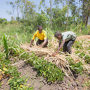 CAPTION: By 'mulching' in their vegetable patches, Fidelis and Andris are able to provide cover for the ground they've just watered from the hot sun. LOCATION: Nsanja-Seze, Vila Ulongwe area, Angonia District, Tete Province, Mozambique. INDIVIDUAL(S) PHOTOGRAPHED: Fidelis Dickson (left) and Andris Dickson (right).