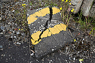 'Wild Orchid, 2014' from the project 'The Fall and Rise of Ravenscraig' by photographer Colin McPherson.<br /> <br /> Photograph shows a piece of road on the site of the former Ravenscraig steelworks.<br /> <br /> This project, photographed in 2014, looks at the topography of the post-industrial landscape at Ravenscraig, the site until its closure in 1992 of the largest hot strip steel mill in western Europe. In its current state, Ravenscraig is one of the largest derelict sites in Europe measuring over 1,125 acres (4.55 km2) in size, an area equivalent to 700 football pitches or twice the size of Monaco. It is currently being developed with a mix of housing, retail and the home of South Lanarkshire College and the Ravenscraig Regional Sports Facility.