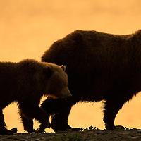 Super Bear Gallery