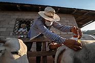 cow vaccination: honduras