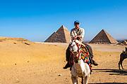 A man prepares to ride a camel at the Giza Pyramid Complex, Giza, Egypt.