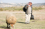 Israel, Negev Desert, Bedouin shepherd and his sheep