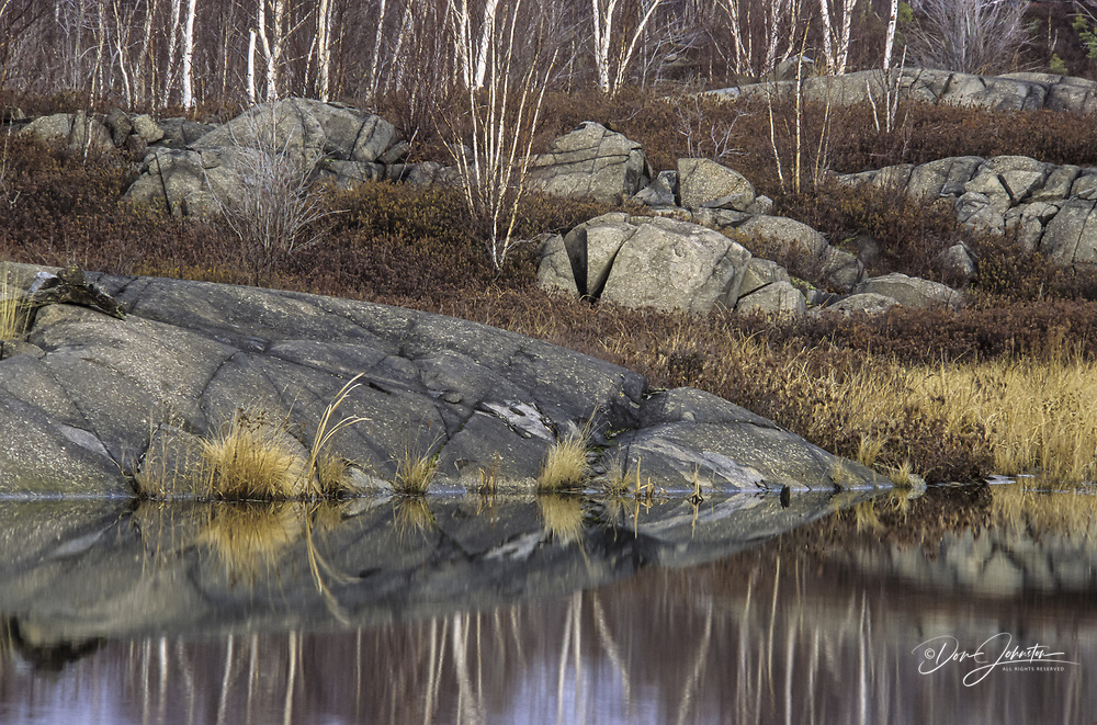 Rock outcrops, birch, grass and dead shrubs reflected in small beaver pond, Greater Sudbury, Ontario, Canada