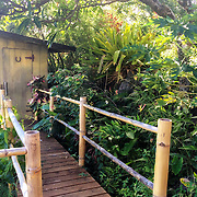 The Dragon's Nest, Kipahulu, HI
