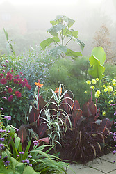 Early on a misty morning in the Exotic Garden at Great Dixter. Planting includes Paulownia tomentosa, Canna 'Durban', Dahlia 'Hillcrest Royal', Cyperus papyrus and Arundo donax var. versicolor syn. A.donax 'Variegata'
