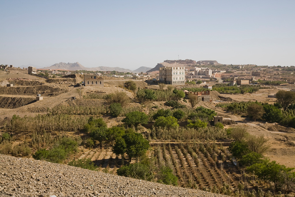 Qat trees outside the city of Sanaa, Yemen. The growing of qat trees in areas surrounding Yemen's cities has led to the depletion of water resources, threatening the water supplies some cities.