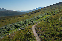 Single track trail of Padjelantaleden Trail though high mountain terrain north of Staloluokta in Padjelanta national park, Lapland, Sweden