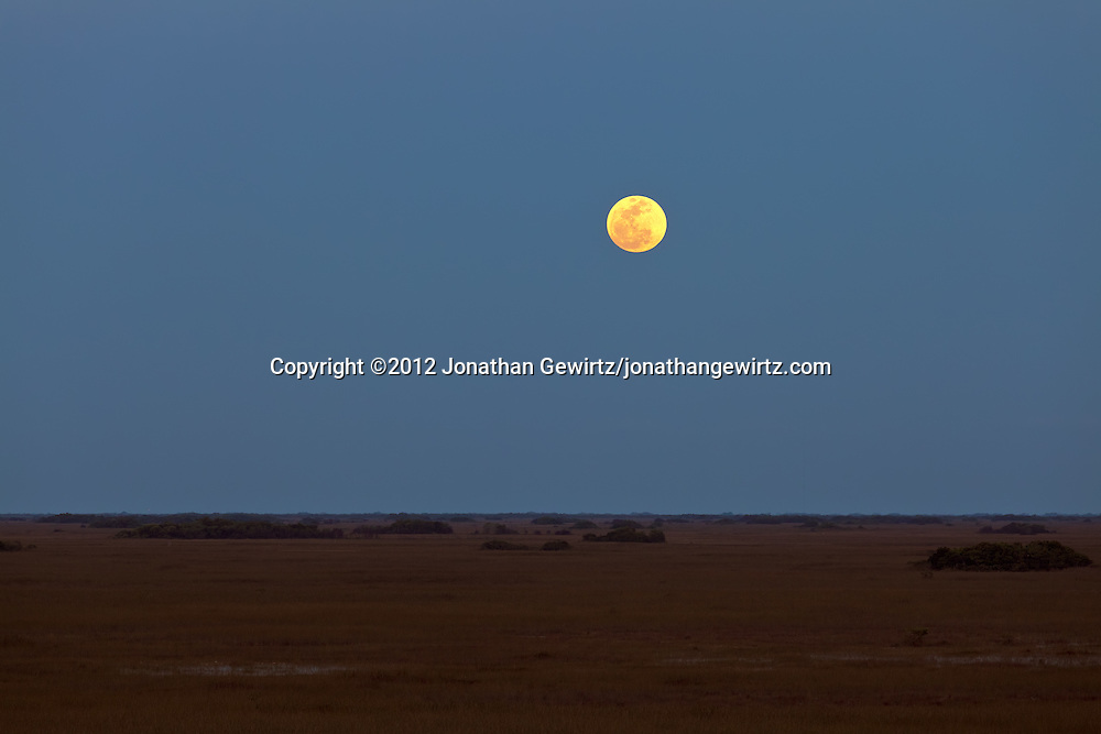 The so-called super moon -- a full moon on the date of the moon's closest annual approach to Earth -- as seen from the observation tower in the Shark Valley section of Everglades National Park, Florida on May 5, 2012. WATERMARKS WILL NOT APPEAR ON PRINTS OR LICENSED IMAGES.