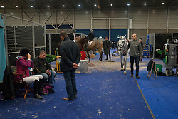Diniz Luciana, POR, Isabeau<br /> Jumping Indoor Maastricht 2017<br /> © Hippo Foto - Sharon Vandeput<br /> 12/11/17