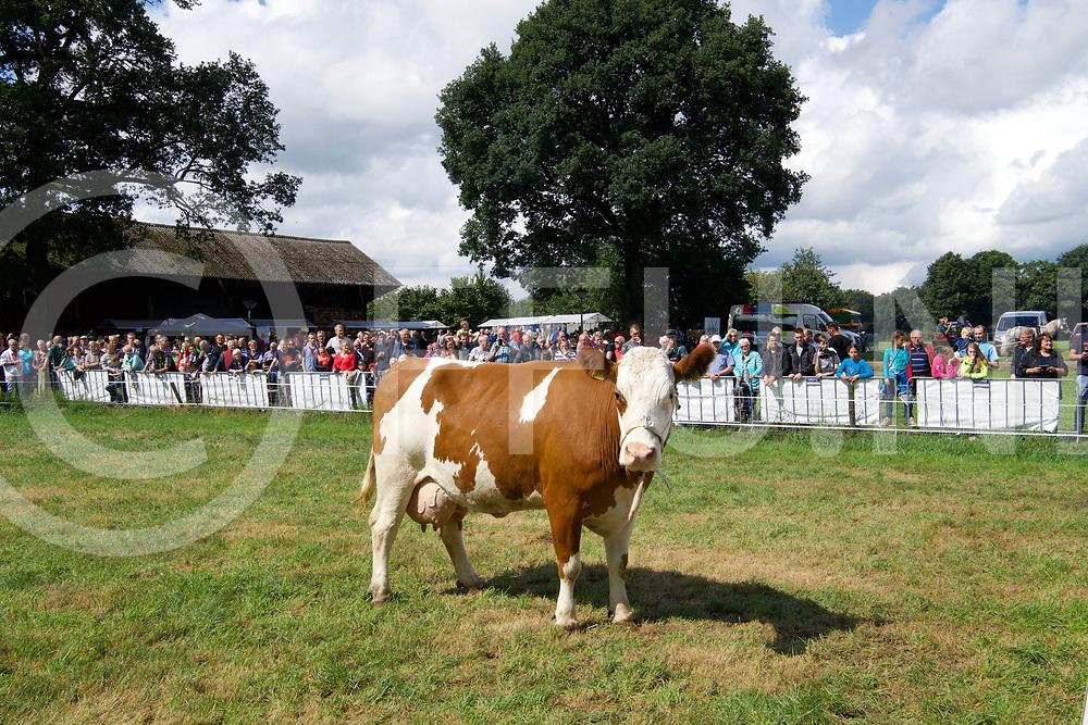 OUD BERGENTHEIM - Boeren markt.<br /> Foto: Schijt je rijk, de koe staat wezenloos in de wei en het volk wacht.<br /> FFU PRESS AGENCY COPYRIGHT FRANK UIJLENBROEK