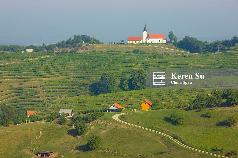Vineyard, Ptuj, Slovenia
