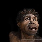 Homo georgicus. Museo de la Evolución Humana (MEH). Burgos. Spain.