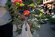 woman with roses bought on an outdoor flower market