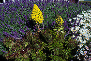Monterey, California, Flowers, Cannery Row