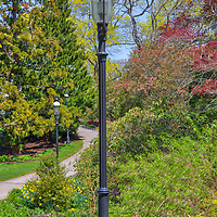 Spring bloom, pathway and lantern at the Heritage Museums and Gardens in Sandich, MA on Cape Cod. <br /> <br /> Heritage Museums and Gardens photography images are available as museum quality photography prints, canvas prints, acrylic prints, wood prints or metal prints. Fine art prints may be framed and matted to the individual liking and decorating needs:<br /> <br /> https://juergen-roth.pixels.com/featured/pathway-at-heritage-museums-and-gardens-juergen-roth.html<br /> <br /> Good light and happy photo making!<br /> <br /> My best,<br /> <br /> Juergen