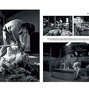 Published by 7K, Reportage, via ZOOM agency. Los «Los Señores del Oro Blanco» se extinguen