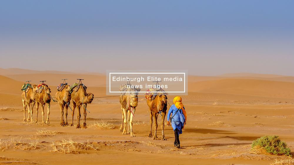 A man leading a camel train across the Moroccan Sahara Desert near Chegagga<br /> <br /> (c) Andrew Wilson | Edinburgh Elite media