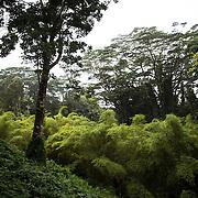 The hike to Akaka Falls on Hawaii.