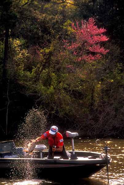 Scenic view of a fisherman pulling a freshly caught fish - Largemouth bass (Micropterus psalmoides) - from a lake into his boat.