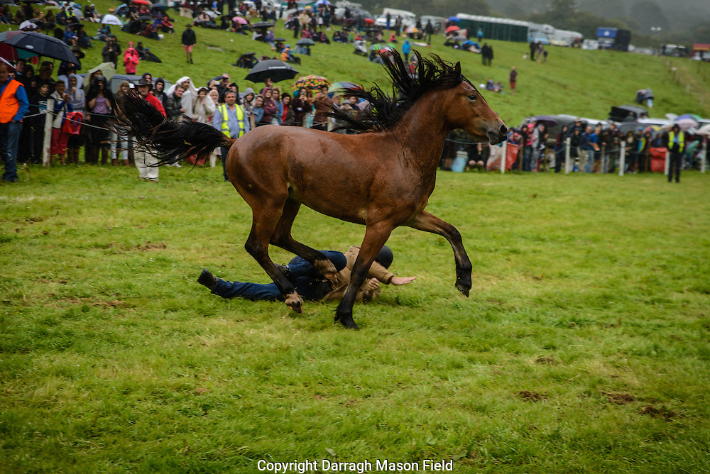 A pony free of his rider trots off
