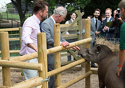 The Prince of Wales meets Teddy the South American Tapir during his visit to Jimmy's Farm in Ipswich where he met the trust's new President, Jimmy Doherty, and learned about the farm's education and rare breeds programme.