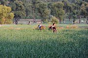 Woment tend onions growing in a terraced, irrigated field on the banks of Rio Panajachel. Panajachel, Departamente de Sololá, Republic of Guatemala. 03Mar14