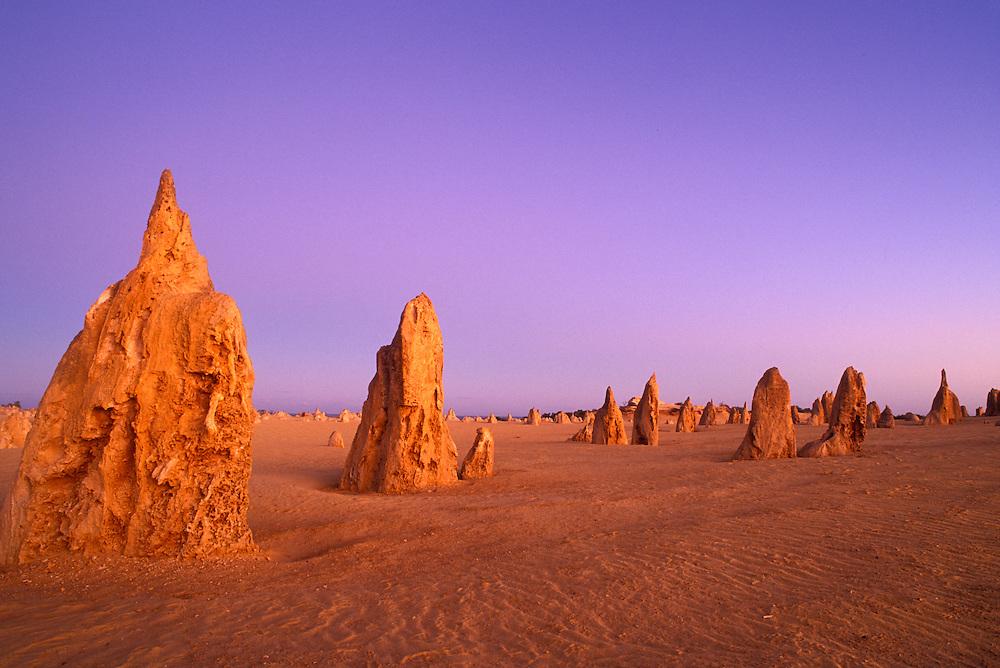 Australia, Western Australia, Early morning light on limestone pinnacles in Nambung National Park near Cervantes