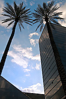Vertical view of a high rise building and palms.