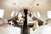First class Fido: Dogs get their OWN £1,250 seats so they can sit beside their owners on airliners<br /><br />The passenger in the seat next to mine yawns contentedly as we taxi along the runway. <br />He hardly stirs when the engines start to roar and the plane accelerates before lifting into the sky. <br />By the time our sleek, six-seater jet reaches cruising height his head has dropped and his eyes have closed. <br /><br />During the two hour hop to Palma, on the island of Mallorca, where his family has a holiday home, my neighbour eschews his complimentary glass of Moet and Chandon champagne and is tempted neither by the inflight entertainment or the pile of glossy magazines.<br />He looks every inch the high flyer – prosperous, self-assured, and remarkably well-groomed. My fellow passenger, Dylan, is a dog.<br /><br />He belongs to a new breed of pampered mutts who, rather than being confined to cages in the hold along with the cargo, sit in their own leather-upholstered seats in the cabin next to their owners.<br />The service is being offered by Victor - a private jet charter company. It isn't a cheap option. <br />Dylan, an eight-year-old miniature Schnauzer, is being charged £1,250 for a seat on a Victor flight to Palma, exactly the same as it costs humans using the service.<br />And a seat is what he gets, not a space on the floor at the back of the plane near the lavatories, not a dedicated mat next to the exit. <br />At one point, Dylan stares out of the window of the Lear40 jet and seems genuinely enthralled by the wispy cloud formation gathering a few hundred feet below. <br />He enjoys the landing, too, as we soar over the Mediterranean and as buildings come into focus as the pilot makes his descent.<br />'How can you have a proper family holiday if you don't take the family dog with you?' asks Dylan's owner, Isabelle Frank, who live in Putney, south-west London. <br />'In the past we have put him in the hold but the trauma was terrible for both of u