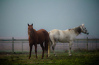 A pair of horses standing in an early morning autumn fog.