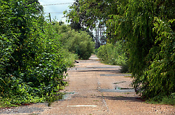 23 August 2013. Lower 9th Ward, New Orleans, Louisiana.<br /> Katrina 8 years later. What would appear to be an overgrown rural road. In a tale of two cities, the hardest hit neighbourhoods struggle to revitalize and return. Many half finished or blighted properties and vacant overgrown lots remain dotted throughout the landscape with limited new construction projects. Residents who have returned complain of limited services, infrequent police patrols, high crime rates, rampant mosquitos and uncontrolled vermin. <br /> Photo; Charlie Varley