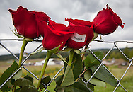 Roses left on a fance at  Flight 93 National Memorial site's temporary memorial  overlooking the field where the flight crashed in Shanksville, Pennsylvania. The temporary site will close on Sept. 9th at 4 P.M. and on Sept. 10 the official memorial will open in time for the 10th anniversary of 9/11
