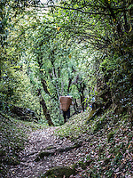 Man carrying a basket on the Annapurna Dhaulagiri trail between Swanta & Ulleri, Nepal.