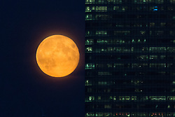 © Licensed to London News Pictures. 09/09/2014. London, UK. A supermoon is seen rising behind an office block in the Canary Wharf financial district in London on 9th September 2014.  Photo credit : Vickie Flores/LNP.