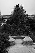 Moongate Garden, Freer Sackler, Washington, DC