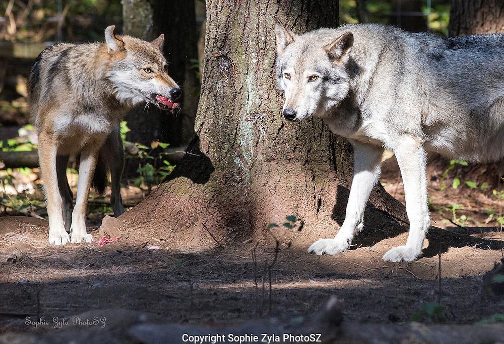 Kiska Thinks Food Fight? Cree doesn't think so!