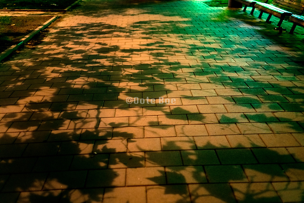 benches with leaves shadow during night in a urban public park