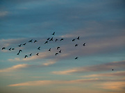 Flock of birds against a colorful sky.