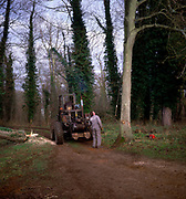 A01XDB Sequence of nine Man cutting down an ash tree in English woodland