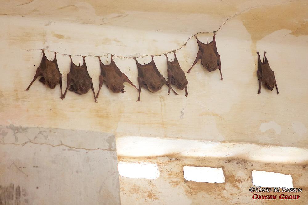Bats, Tuol Sleng