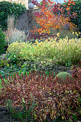 Autumn border at Pettifers with Persicaria affinis 'Donald Lowndes' AGM  in the foreground and Cotinus 'Grace' in the distance.