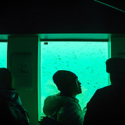 Tourists visiting underwater observatory at Milford Sound