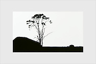 A lone old pine tree at the barren windblown landscape of Jurmo island. The Archipelago Sea, Finland, 1996.