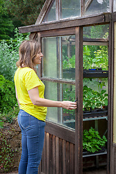 Opening a greenhouse door for ventilation in summer